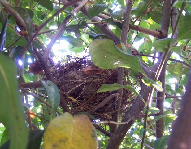 Bird watch nest and dust bath post no 300
