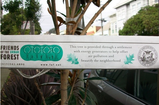 Friends of the urban forest san francisco