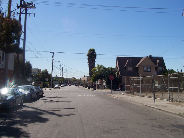 Local Ecologist: Tree Walk: Tree-named streets in Oakland, California
