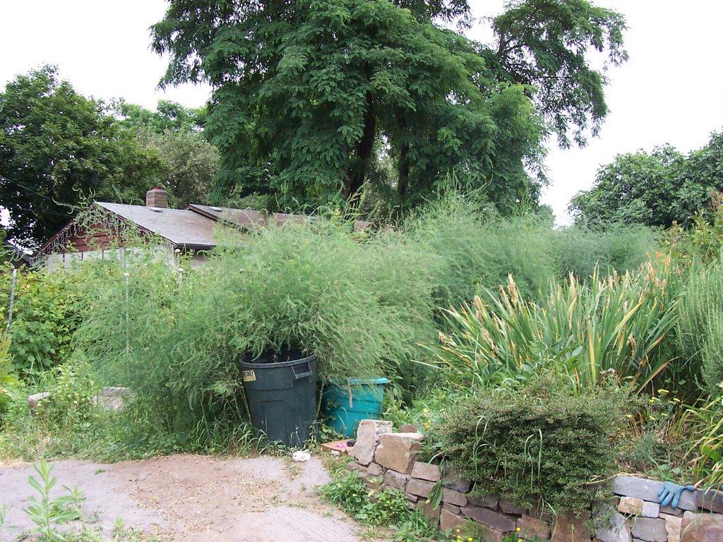local ecology blog - local ecologist: A neighborhood farm ...